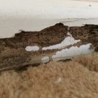 Buying Property? Why You Need a Pre-Purchase Termite Inspection