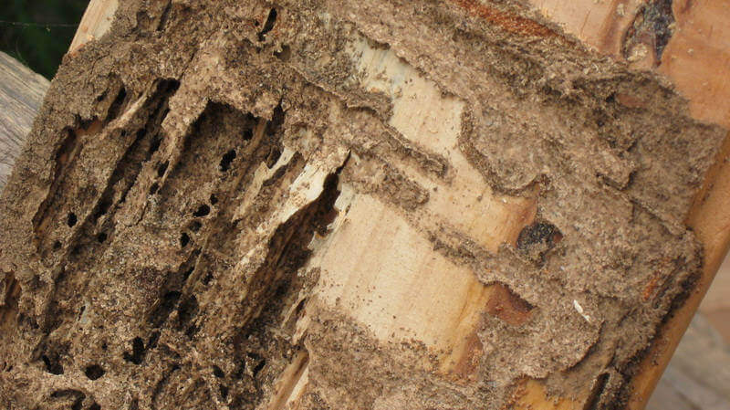 Termite & Pest inspections